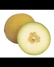 Galia-Meloni
