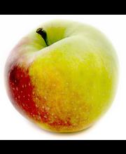 Alitalon Omena