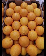 Appelsiini valencia
