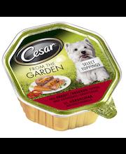 Cesar Garden 150g Häränlihaa Kasvissydämellä, täysrehua aikuisille koirille