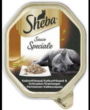 Sheba Speciale 85g Kalkkunapata, täysrehua aikuisille kissoille