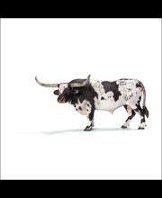 Sch Texas Longhorn -Sonni