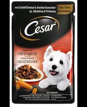 CESAR 100g Häränlihaa & Porkkanaa kastikkeessa, täysrehua aikuisille koirille