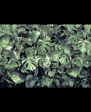 Fototapetti verdure 8-333