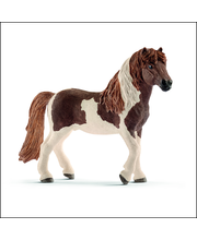 Icelandic Pony stallion