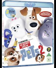 Bd Secret Life Of Pets2