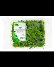 Rucola-Salaatti