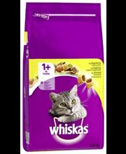 Whiskas 1  3,8kg Kanaa
