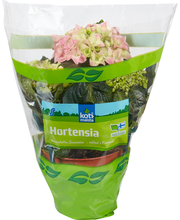 Kotimaista hortensia 4-6