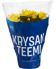 Krysanteemi