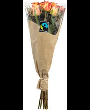 Rainbow 10kpl reilun kaupan ruusut värilajitelma