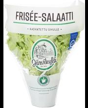 Järvikylä min115g Frisée salaatti, ruukku
