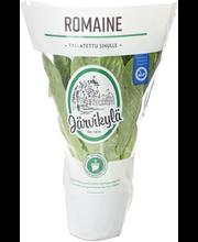 Järvikylä min115g Romaine salaatti, ruukku
