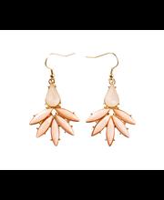 Cailap korvakoru koralli