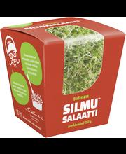 Silmusalaatti Vau Miten Tulinen Luomu Salaatti