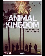 Dvd Animal Kinddom 1 Kau