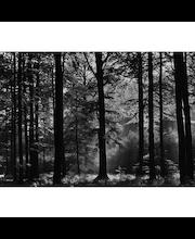 Idealdecor valokuvatapetti Avalon 00115, 8-osainen, 366 x 254 cm mustavalkoinen