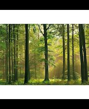 Idealdecor valokuvatapetti Autumn Forest 00216, 8-osainen, 366 x 254 cm