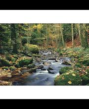 Idealdecor valokuvatapetti Forest Stream 00278,  8-osainen, 366 x 254 cm