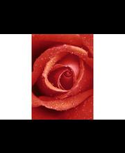 Idealdecor valokuvatapetti Rose 00368, 4-osainen, 183 x 254 cm