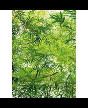 Idealdecor valokuvatapetti Bamboo 00372, 4-osainen, 183 x 254 cm