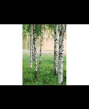 Idealdecor valokuvatapetti Nordic Forest 00381, 4-osainen,  183 x 254 cm