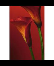 Fototapetti lilies 00406
