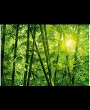 Idealdecor valokuvatapetti Bamboo Forest 00123, 8-osainen, 366 x 254 cm