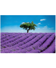 Idealdecor valokuvatapetti Provence 00144, 8-osainen, 366 x 254 cm