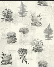 Studiode tapetti botanik 218123