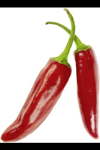 Chili rawit pun 7 tulinen