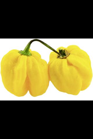 Habanero keltainen erittäin tulinen 10