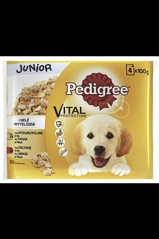 Pedigree Junior hyytelölajitelma 4x100g
