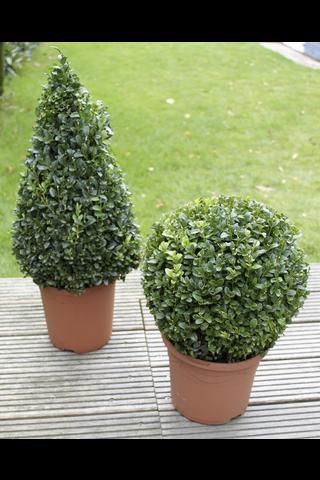 P-Plant puksipuu ja Deco-ruukku