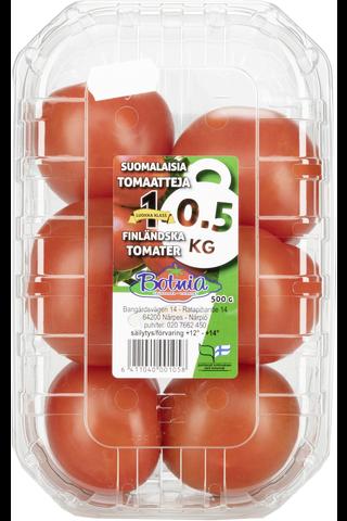 Tomaattirasia