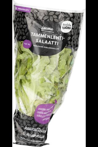 Luomu Tammenlehtisalaatti