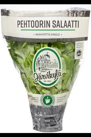 Järvikylä min. 120g Pehtoorin salaatti, ruukku