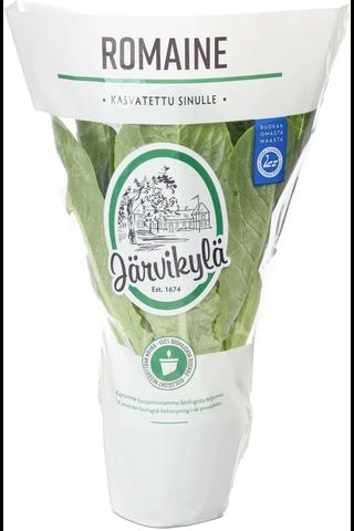 Järvikylä min. 115g Romaine salaatti, ruukku