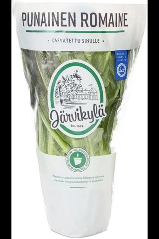 Järvikylä min. 115g Punainen Romaine salaatti, ruukku