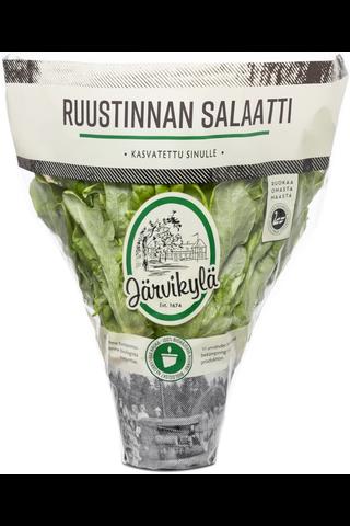Järvikylä min. 120g Ruustinnan salaatti, ruukku