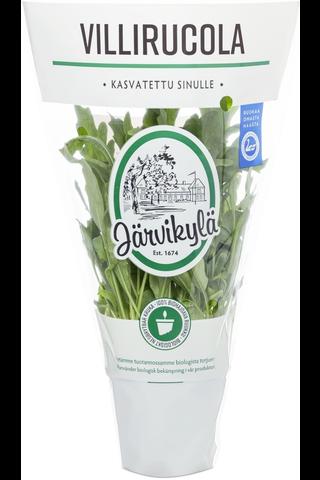 Järvikylä min. 50g Villirucola salaatti, ruukku