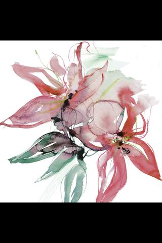 Jukka Rintala Dunisoft 12kpl 40cm Amazon Lily lautasliina