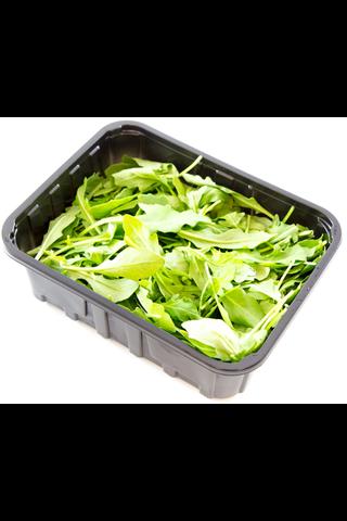 Rucola Salaatti