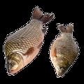 Kalaa